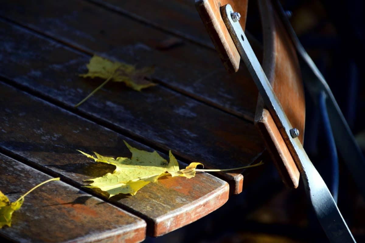 silla, mesa, hojas, otoño, sombra, bosque, parque, madera