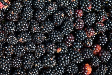 food, blackberry, berry, fruit, macro, detail