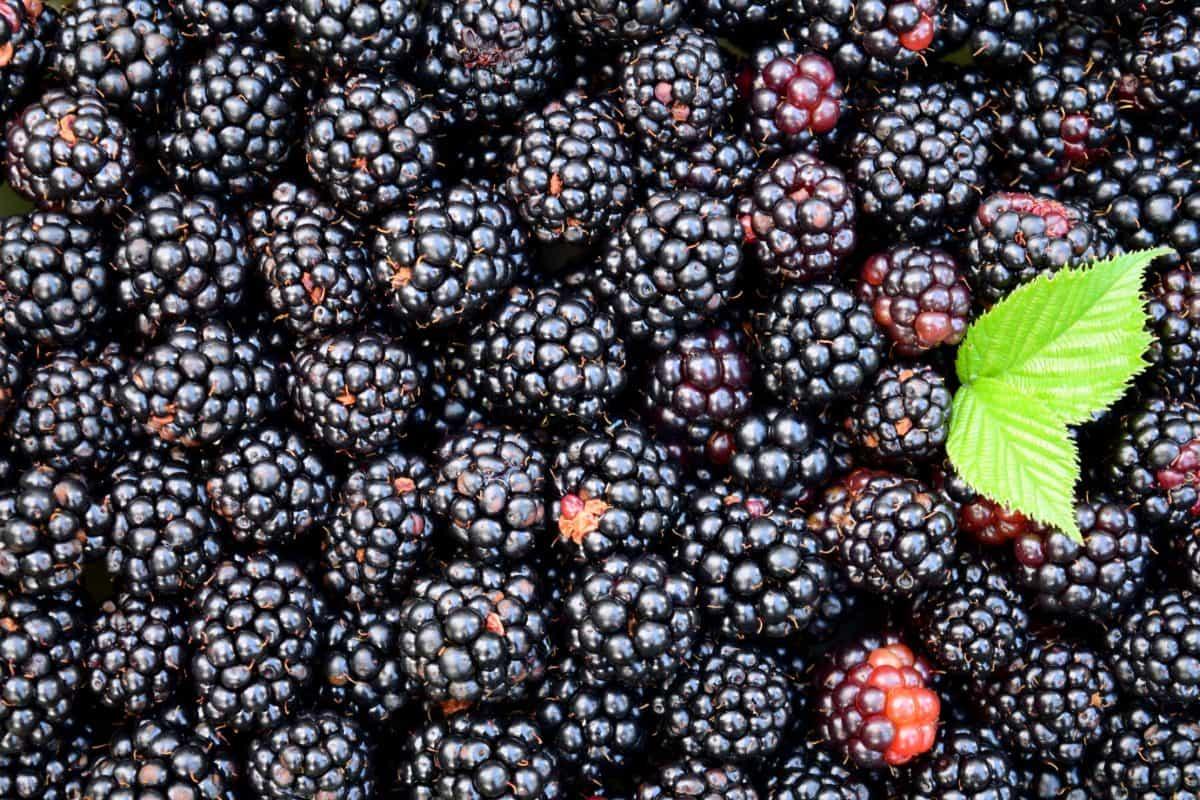 Lebensmittel, Obst, Brombeere, Beeren, süß, Diät