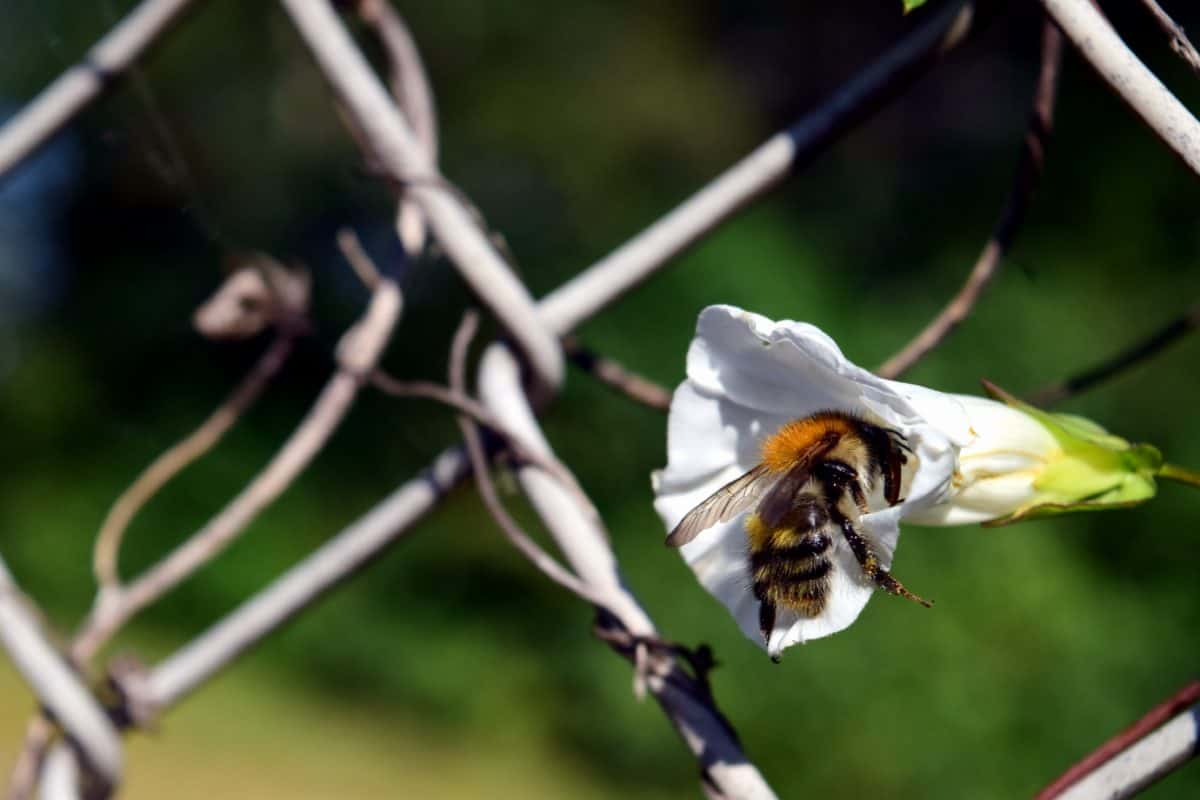 insect, nature, tree, bee, outdoor, pollen