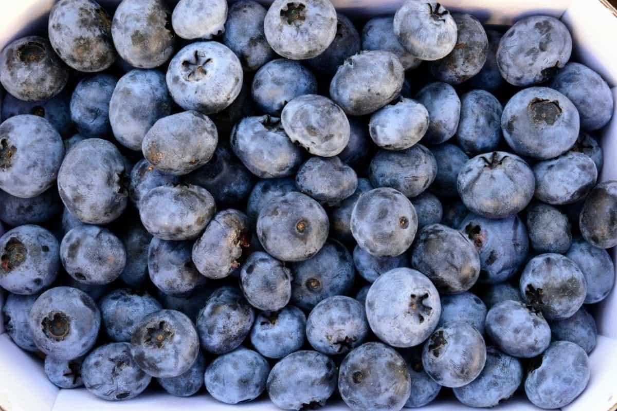 blueberry, jagody, owoce, żywienia, żywności, słodki, organiczne