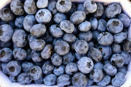 food, blueberry, berry, fruit, nutrition, sweet, organic