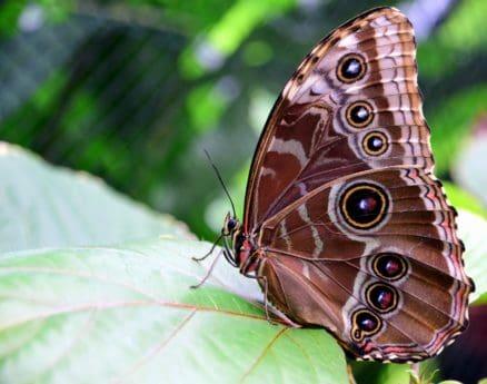 sommer, insekt, natur, smukke, fløj, makro, animal, sommerfugl, dyreliv