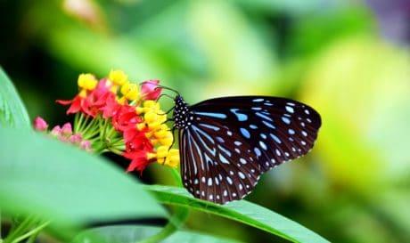 natura, insetto, farfalla, macro, estate, giardino, fiori, pianta