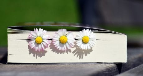 flower, herb, plant, daisy, petal, books, literature, decoration