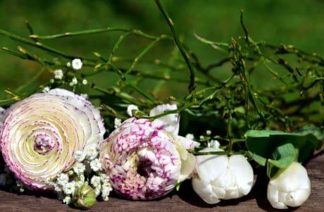 nature, flower, leaf, nature, plant, rose, summer