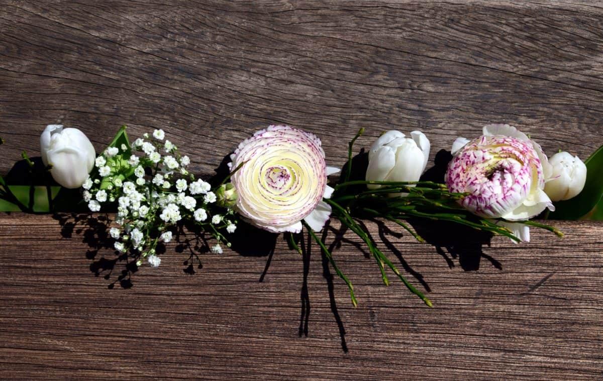 drvo, prirode, cvijeća, aranžmana, ruža