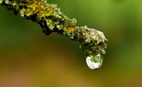 gota, agua, líquido, naturaleza, hoja, lluvia, planta