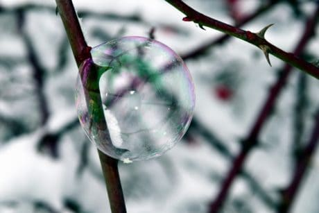 branch, rose, frost, snow, sphere, reflection