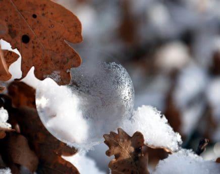 flocon de neige, sphère, feuille, réflexion, branche, froid