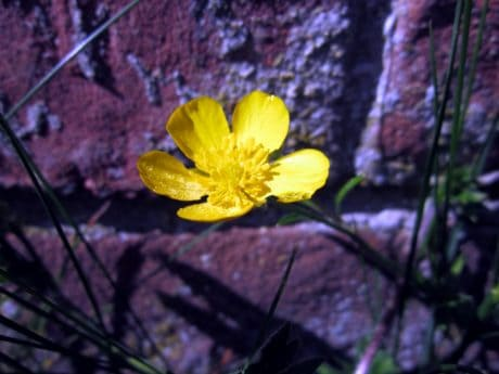 garden, flower, leaf, flora, nature, environment, herb, wall, stone