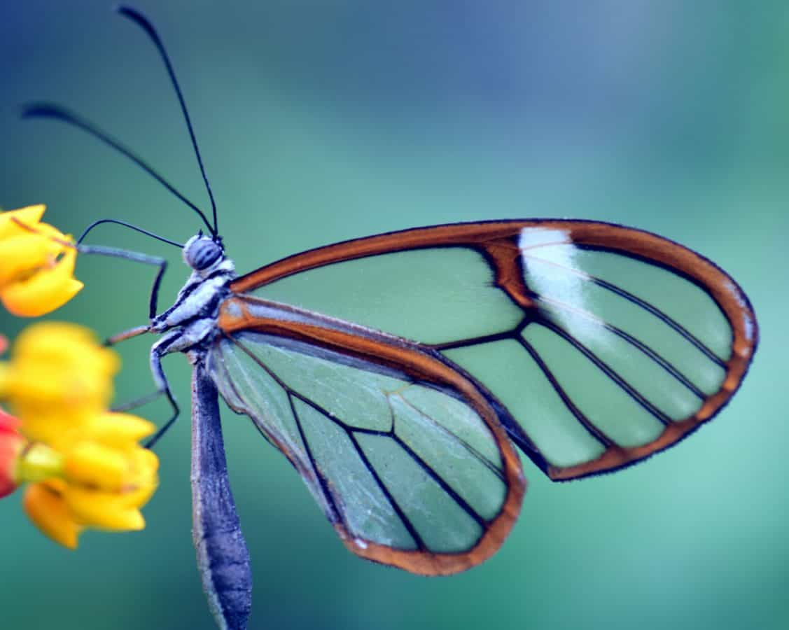 wildlife, biology, nature, invertebrate, macro, butterfly, insect, outdoor