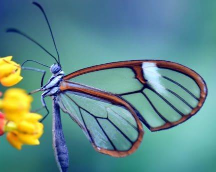 vida silvestre, biología, naturaleza, invertebrados, macro, mariposa, insecto, al aire libre