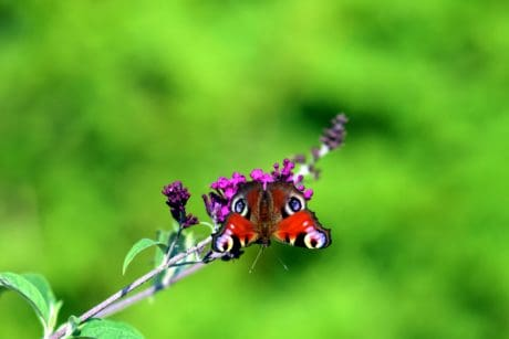 animal, summer, flower, butterfly, garden, nature, insect, leaf