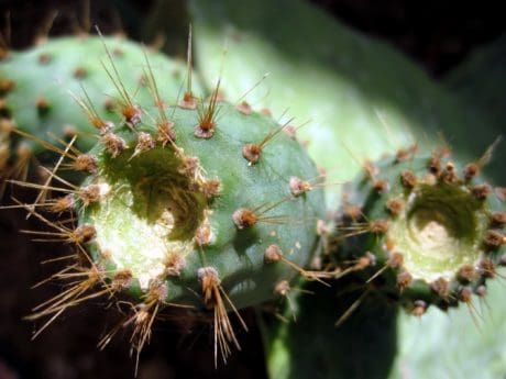 garden, spike, flora, sharp, nature, cactus, desert, macro, thorn