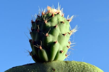 macro, flora, nature, sharp, desert, cactus, blue sky, thorn