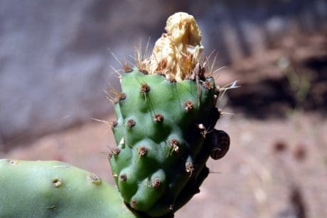 sharp, dry, flora, cactus, nature, desert, outdoor, daylight
