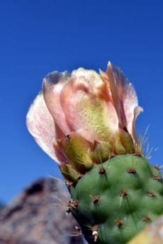 nature, flower, cactus, desert, plant, blue sky