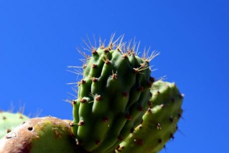 spike, sharp, flora, nature, cactus, desert