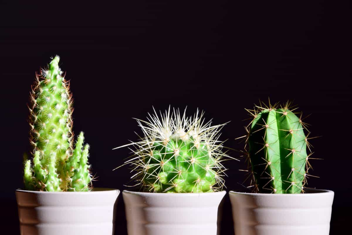 spike, leaf, nature, sharp, photo studio, flora, cactus, plant