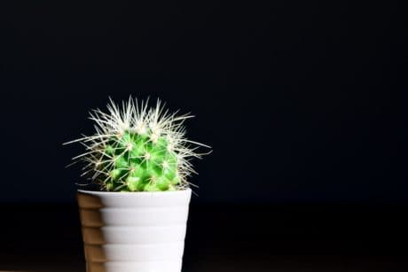 cactus, pot, plant, leaf, nature, photo studio, dark