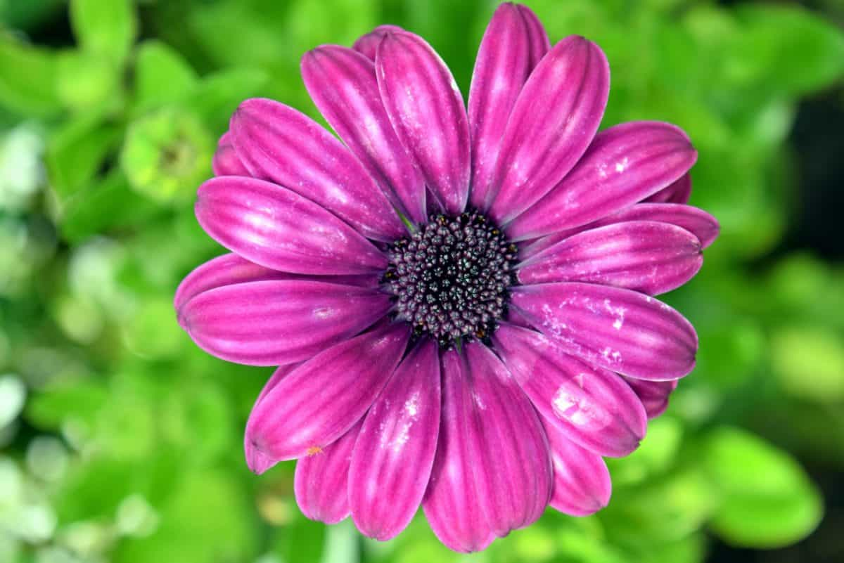 makro, pistil, pollen, natur, flora, blomst, sommer, hage, kronblad, rosa