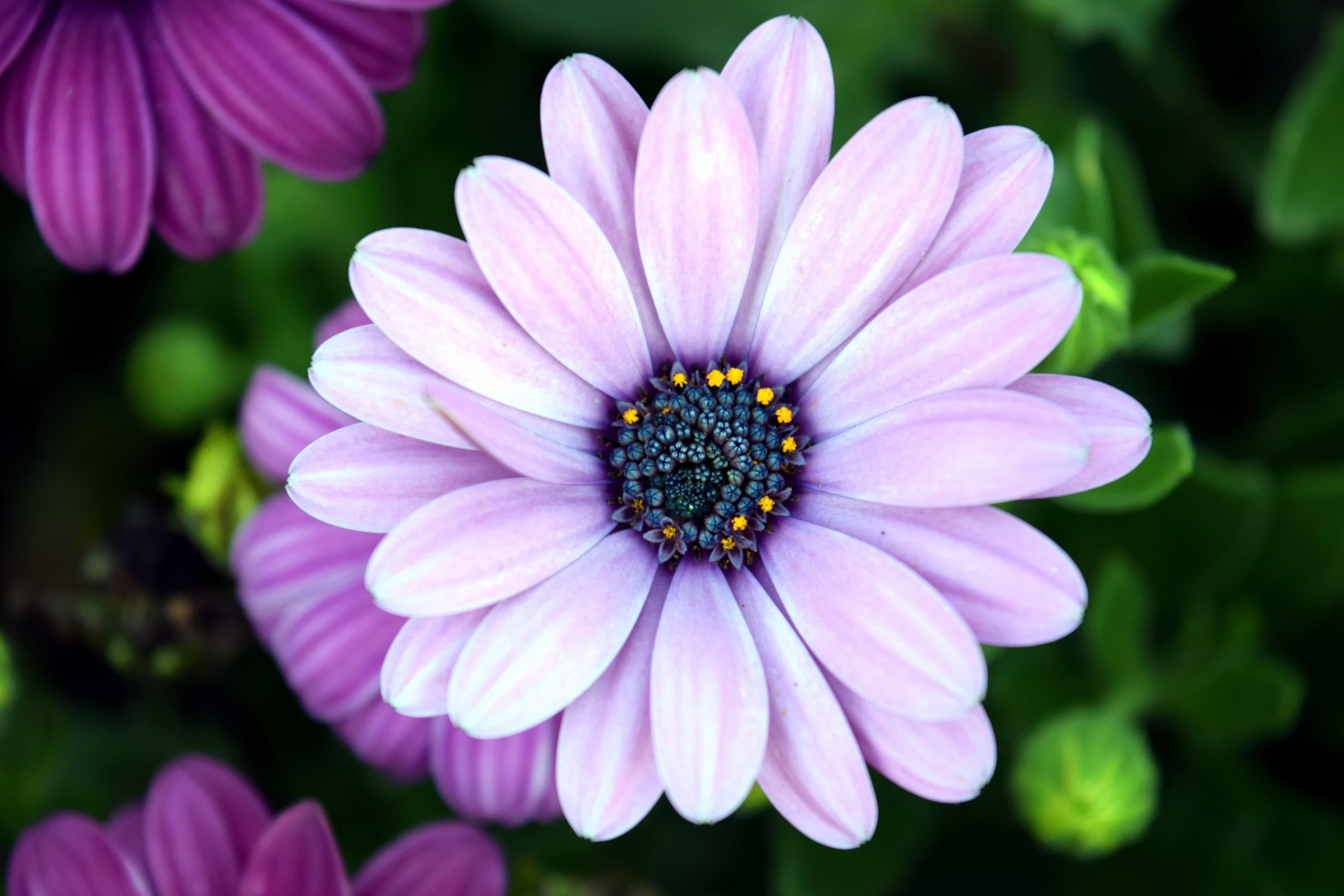 무료 사진 여름 매크로 자연 식물 꽃잎 정원 꽃 꽃