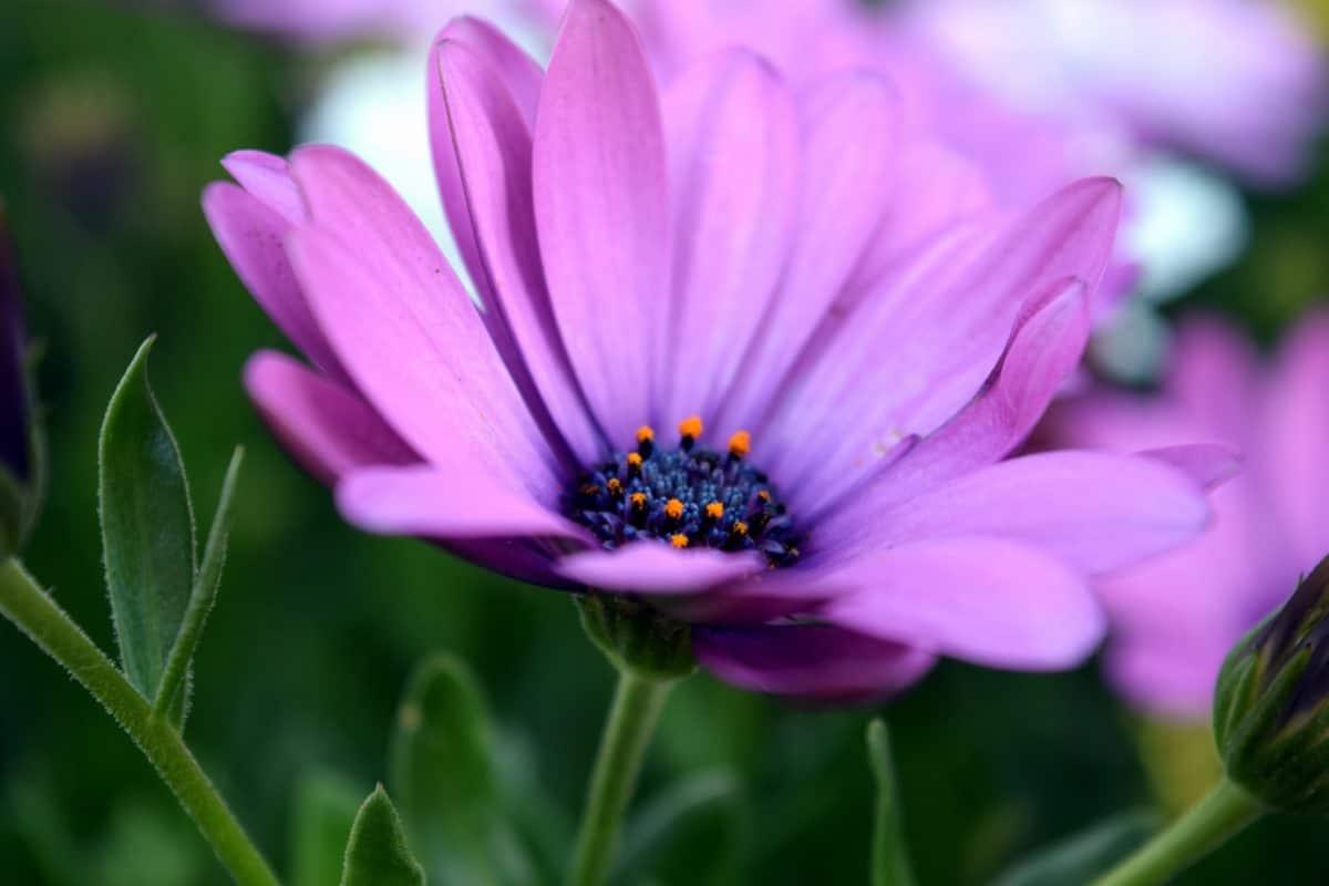 makro Emiö, mettä, flora, lehtiä, Internet, luonto, kukka, kesällä terälehti