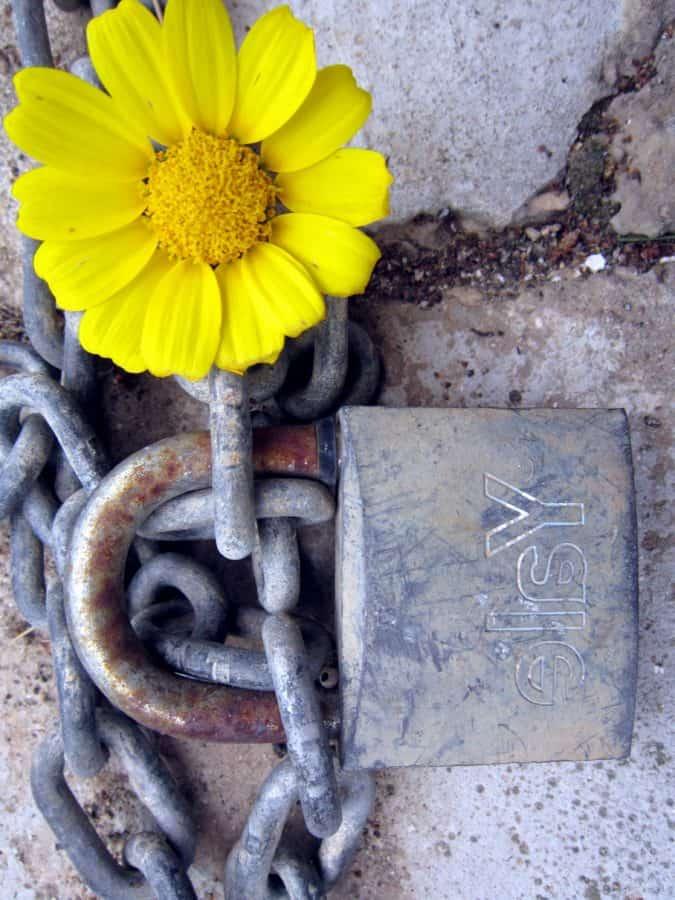 óxido, acero, seguridad, cadena, flor, viejo, candado, hierro, metal