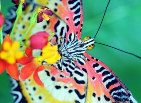 蝴蝶, 昆虫, 自然, 动物, 五颜六色, 宏观, 多彩