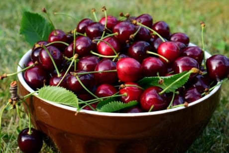 fruits, cerise, nourriture, sweet, vitamine, verger biologique, alimentation,