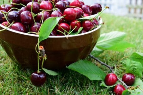 fruit, leaf, delicious, cherry, food, sweet