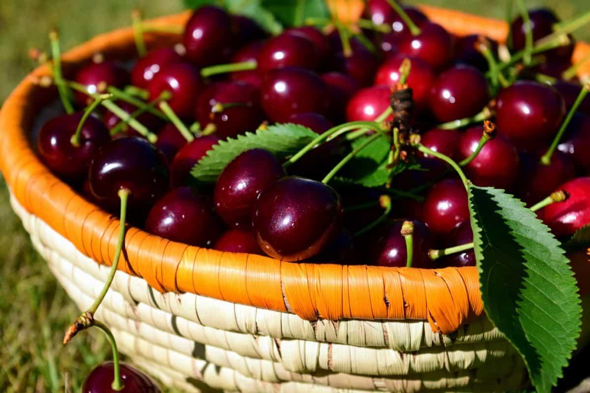 basket, leaf, fruit, wicker basket, cherry, food, sweet, organic,