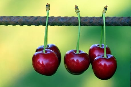 food, cherry, fruit, macro, wire, delicious, nutrition, berry, sweet