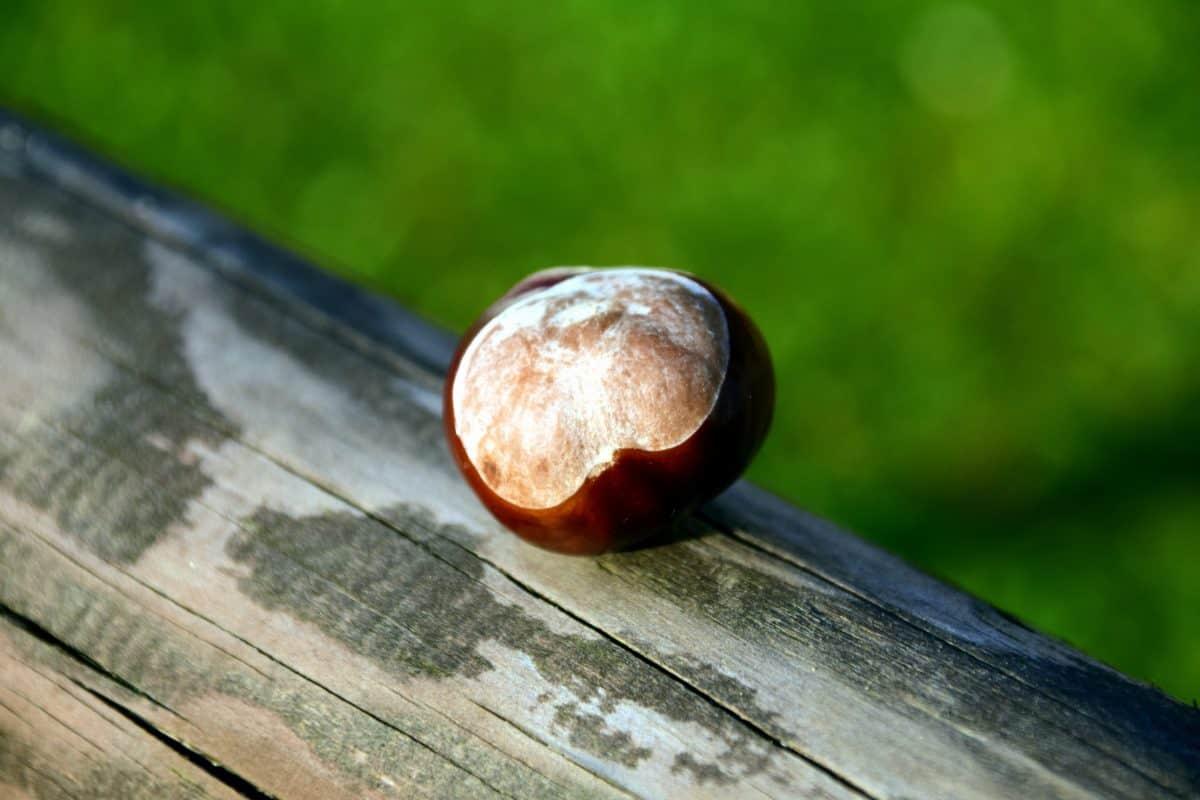 roślin, drewna, jądra, kasztan, jesień, Na Dworzu, detal, makro
