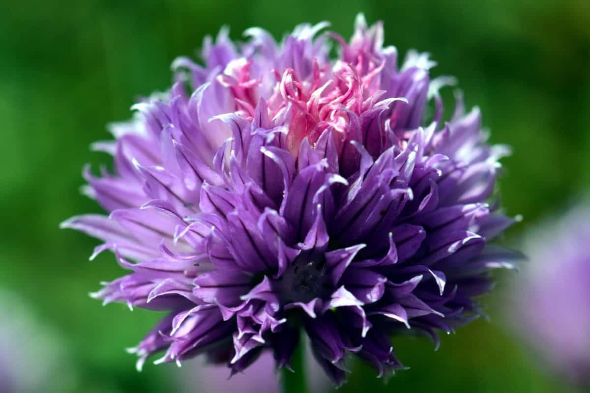 Природа, лист, цветок, флора, Лепесток, летний сад,