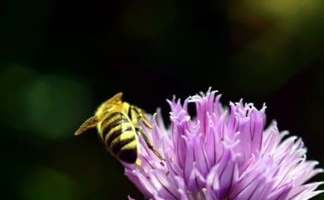 fiore, natura, insetto, ape, estate, pianta, fiore, macro