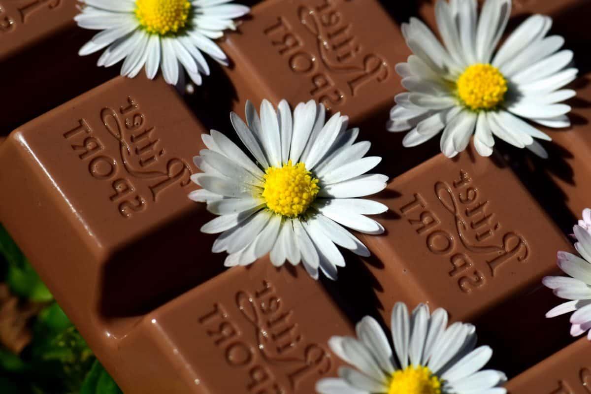 noir, chocolat, fleur, plante, herbe, fleur, natures mortes, macro, fleur