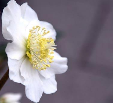 flor, flora, hoja, naturaleza, macro, Pétalo, jardín, planta, pistilo, flor