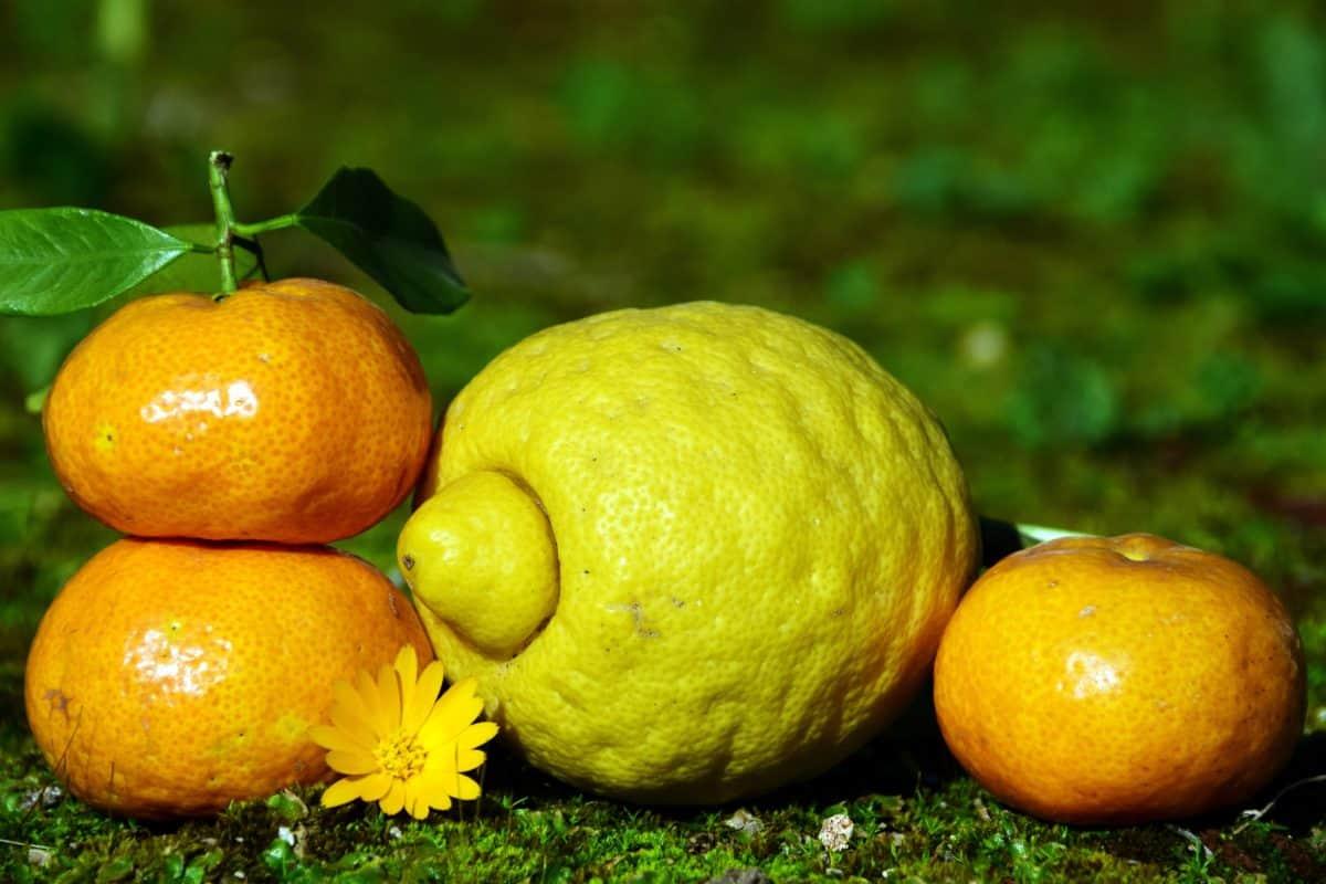 frutas, cítricos, limón, mandarina, hojas, alimentos, hierba verde, al aire libre