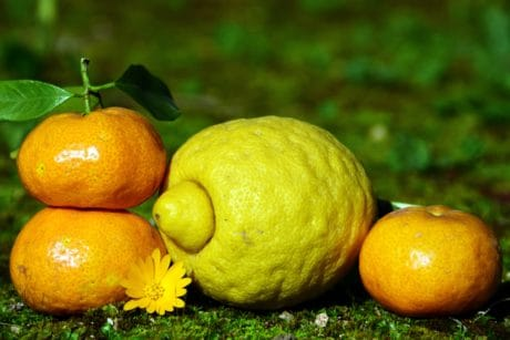 fruit, citrus, lemon, mandarin, leaf, food, green grass, outdoor
