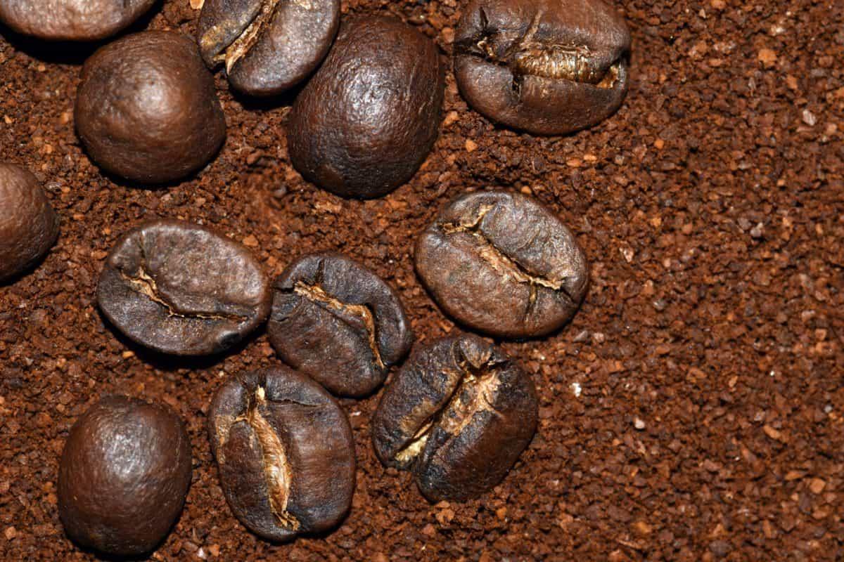 คาเฟอีน เครื่องดื่ม เมล็ดพันธุ์ มืด กาแฟ เอสเปรสโซ่ ถั่ว