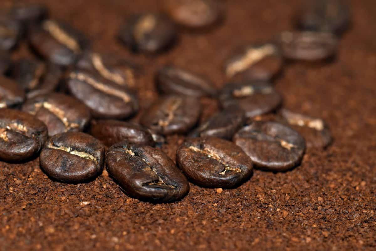 kofein, piti, mraka, kava, espresso, grah