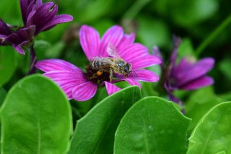 bee, insect, garden, flora, flower, nature, macro, summer, leaf