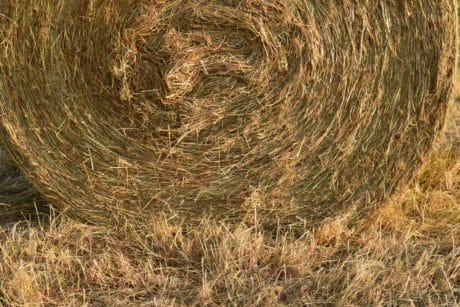 straw, agriculture, summer, nature, pattern, dry, texture, plant, field