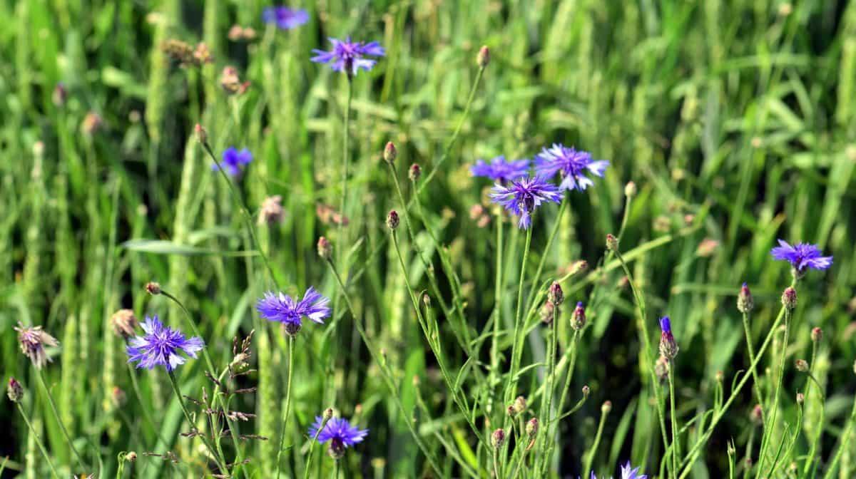 Leaf, natur, blomst, grønt gress, flora, sommer hage, felt