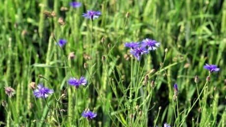 foglia, natura, fiori, erba verde, flora, giardino, campo estivo,