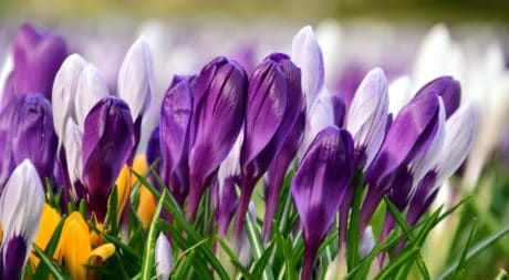 Крокус, летнее, макро, цветок, флора, природа, лист, лето, Сад