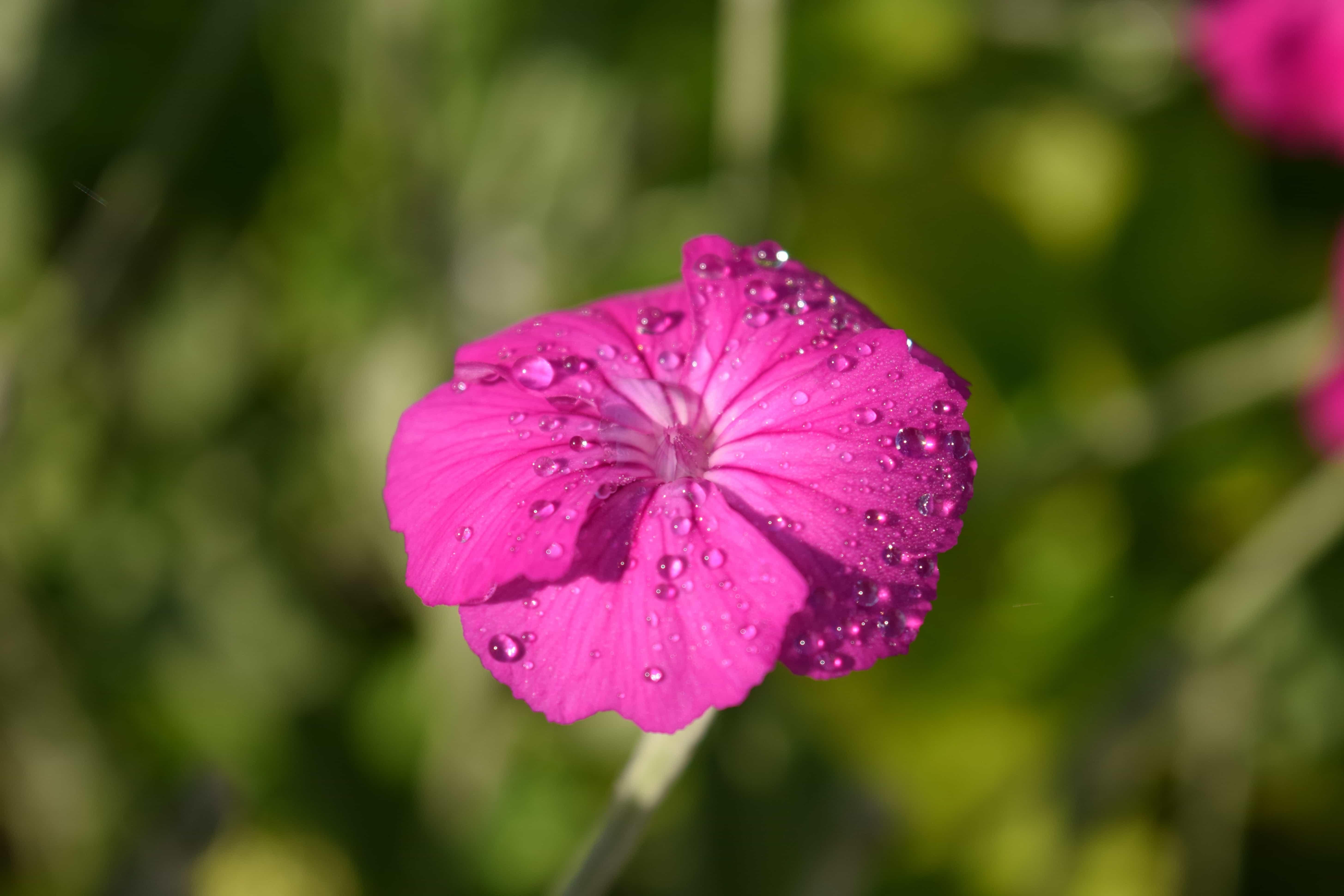 Free Picture Nature Summer Flora Flower Petal Garden