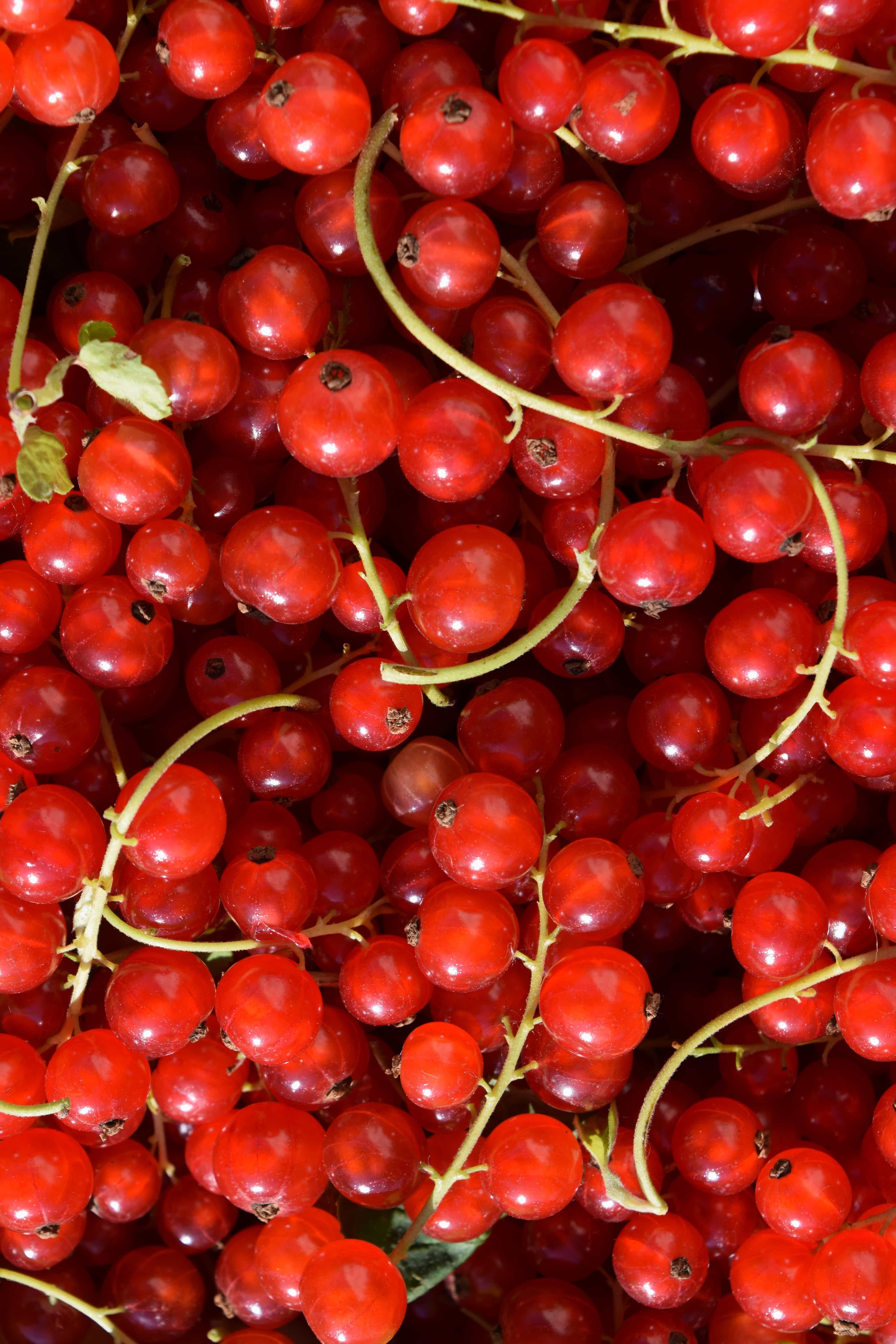 free picture  fruit  berry  nutrition  food  diet  sweet